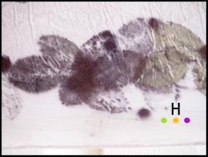 rose leaf eco print detail