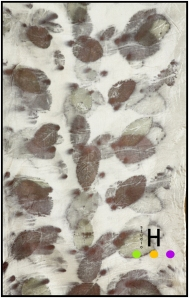 rose leaf scarf 2 detail b blog
