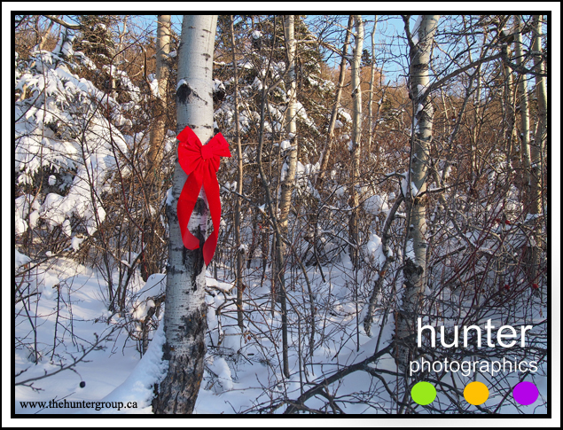 Festive Forest - Woodlea, Red Deer, Alberta, Canada