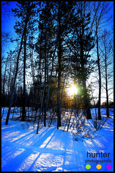 Winter trees at McKenzie Trails, Red Deer, Alberta, Canada.