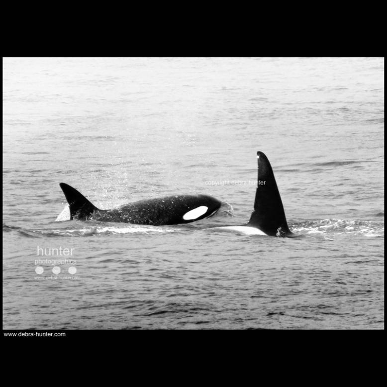 Orcas, BC, Canada